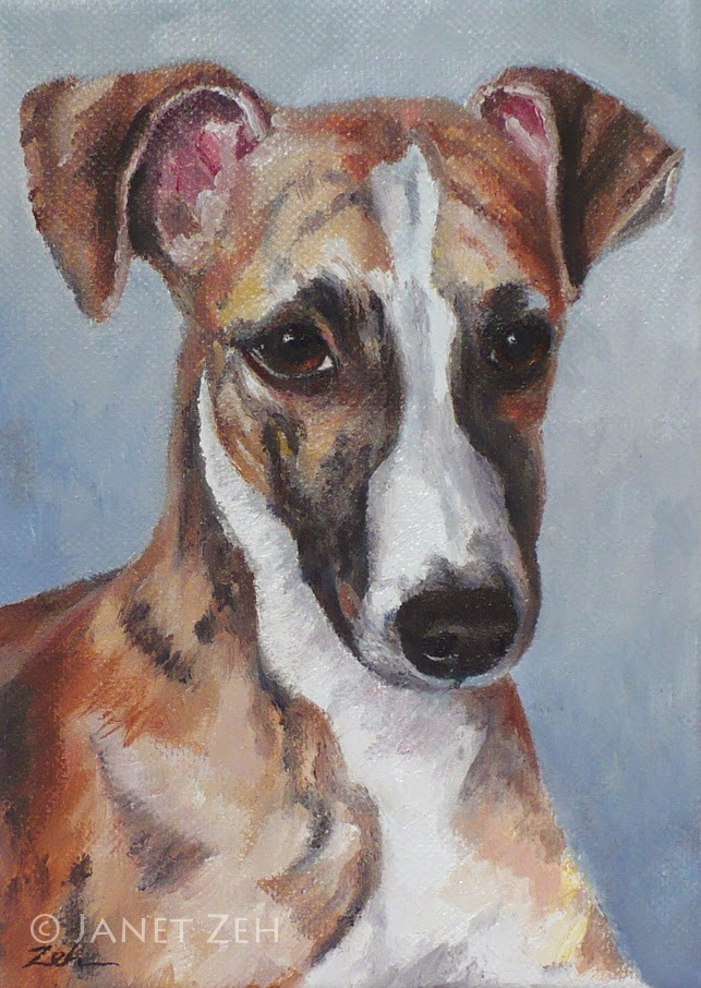 Dog pet portrait of a whippet