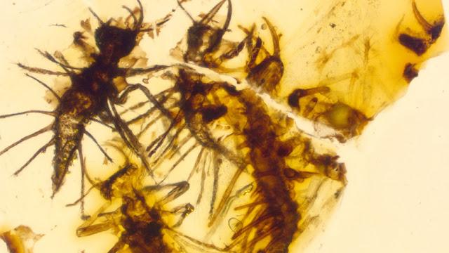 Hallan la primera prueba de cómo nacían los insectos hace 130 millones de años