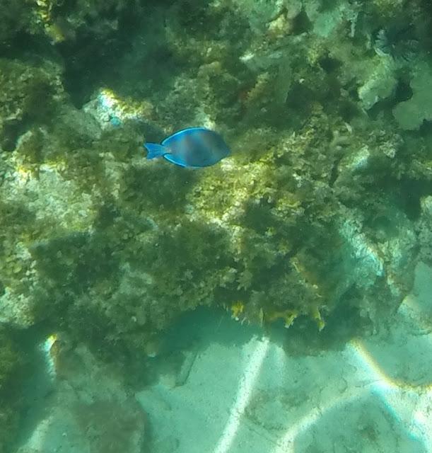 GoPro Hero underwater pic