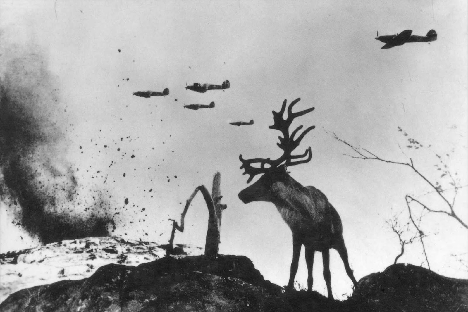 Reindeer Yasha at War. Murmansk area, 1941.