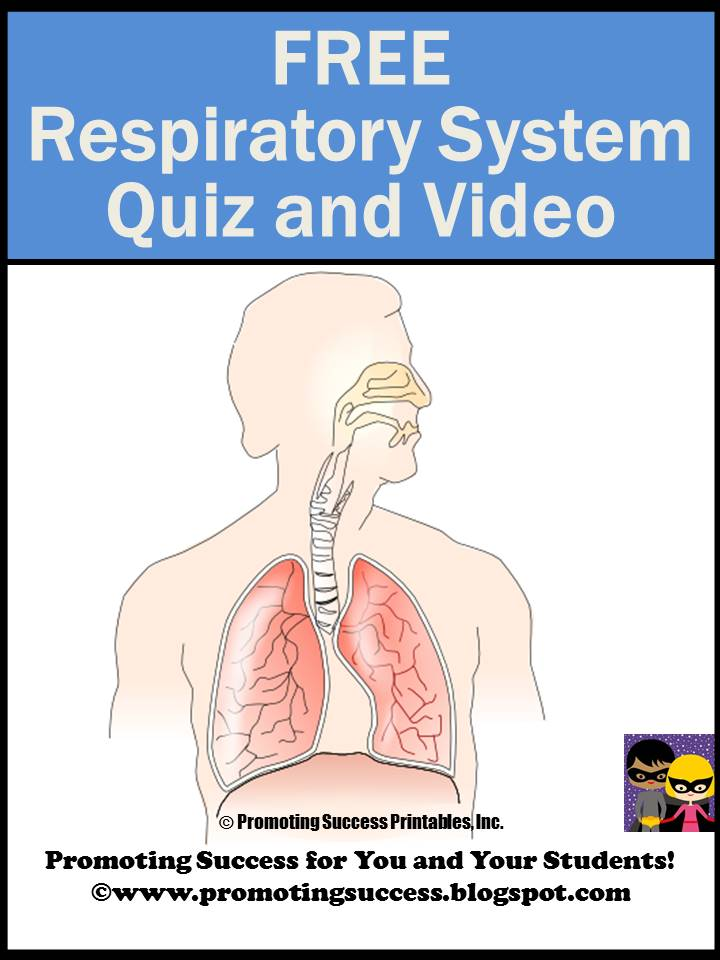 Promoting success respiratory system for kids 5th and 6th grade respiratory system for kids 5th and 6th grade ccuart Choice Image