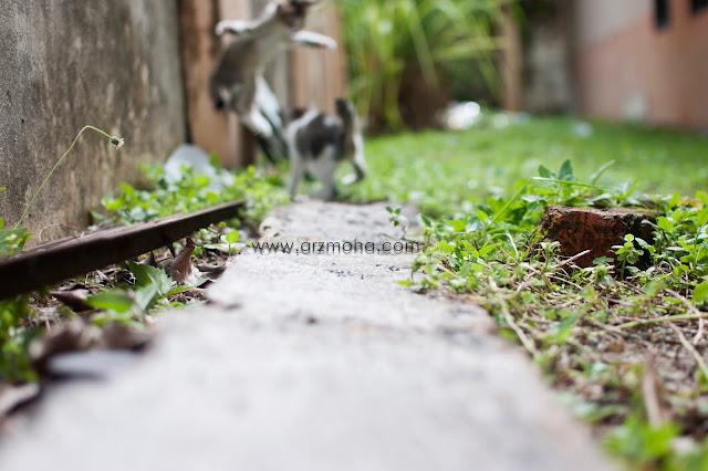 gambar anak kucing lompat, salah fokus, loss focus, unfocussed, photography fokus pada subjek, bahana hilang fokus,