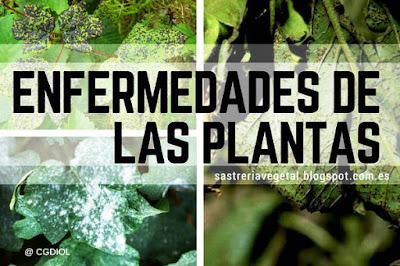 Cuales son las enfermedades de las plantas