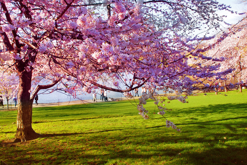 Below You Can Find Spring Wallpapers For Your Desktop Backgrounds Free