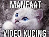 Beberapa Manfaat Ketika Melihat Video Kucing