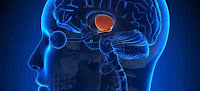 gangguan jin di otak