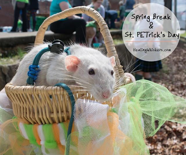 Spring Break & St. PETrick's Day