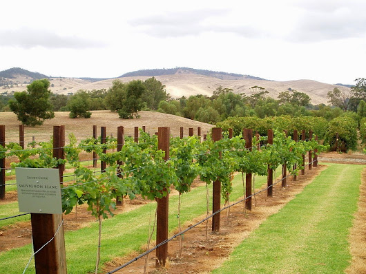 Barossa Valley: Wine paradise or something more?