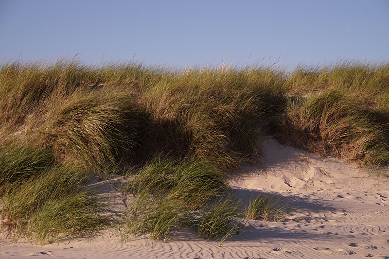 Sommerabend Strand Düne Amrum