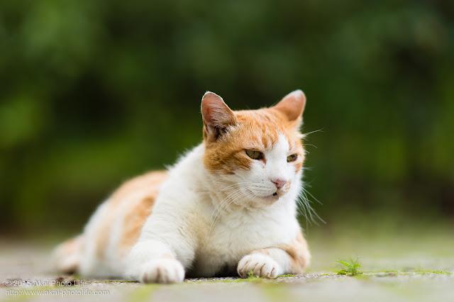 こんな人間いるよねって感じの猫 「う~~~~ん」