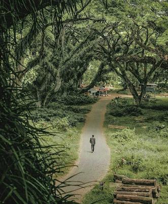Wisata Yang Mirip Film Lord of The Ring ataupun Hobbit di Banyuwangi
