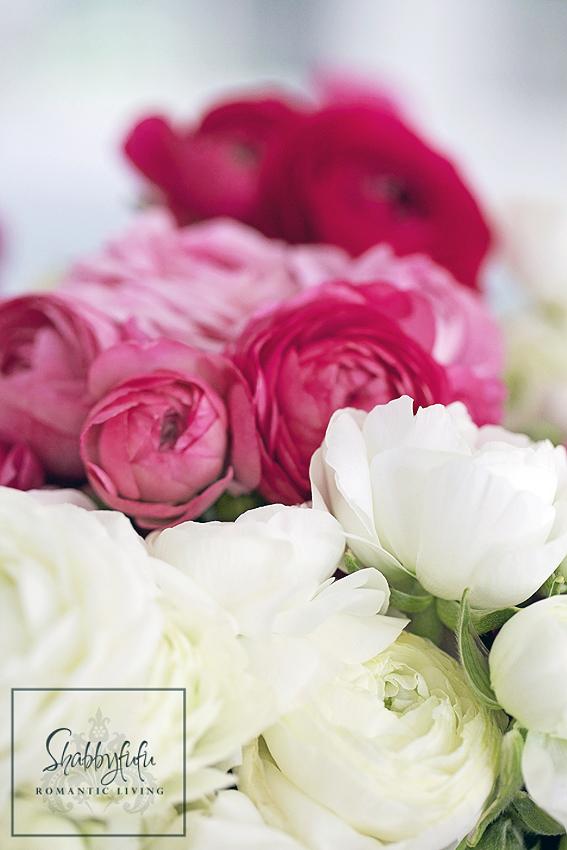 pink ranunculus in arrangement