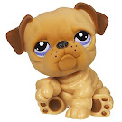 Littlest Pet Shop Tubes Bulldog (#1342) Pet