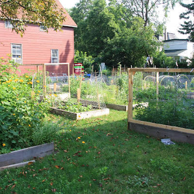 uOttawa King Edward Community Garden