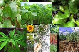Penggolongan Tumbuhan dan Cara Merawat Tanaman
