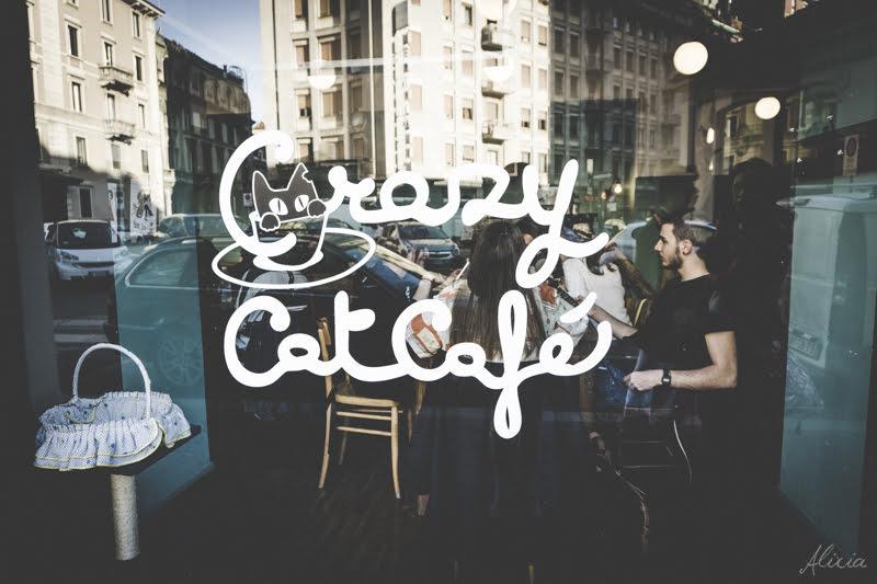 Cosa fare a Milano nel weekend || Crazy cat cafè il bar con i gatti