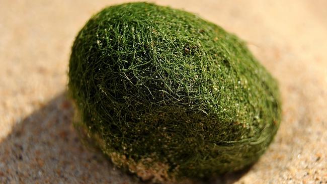 Australia Sydney: Mysterious green eggs on the beach