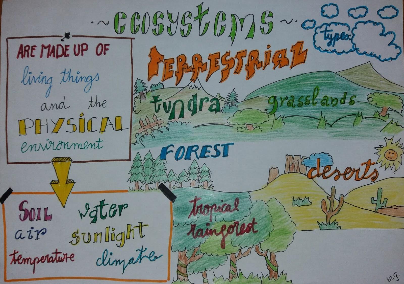 Milaenglish Blog Ecosystems Visual Thinking