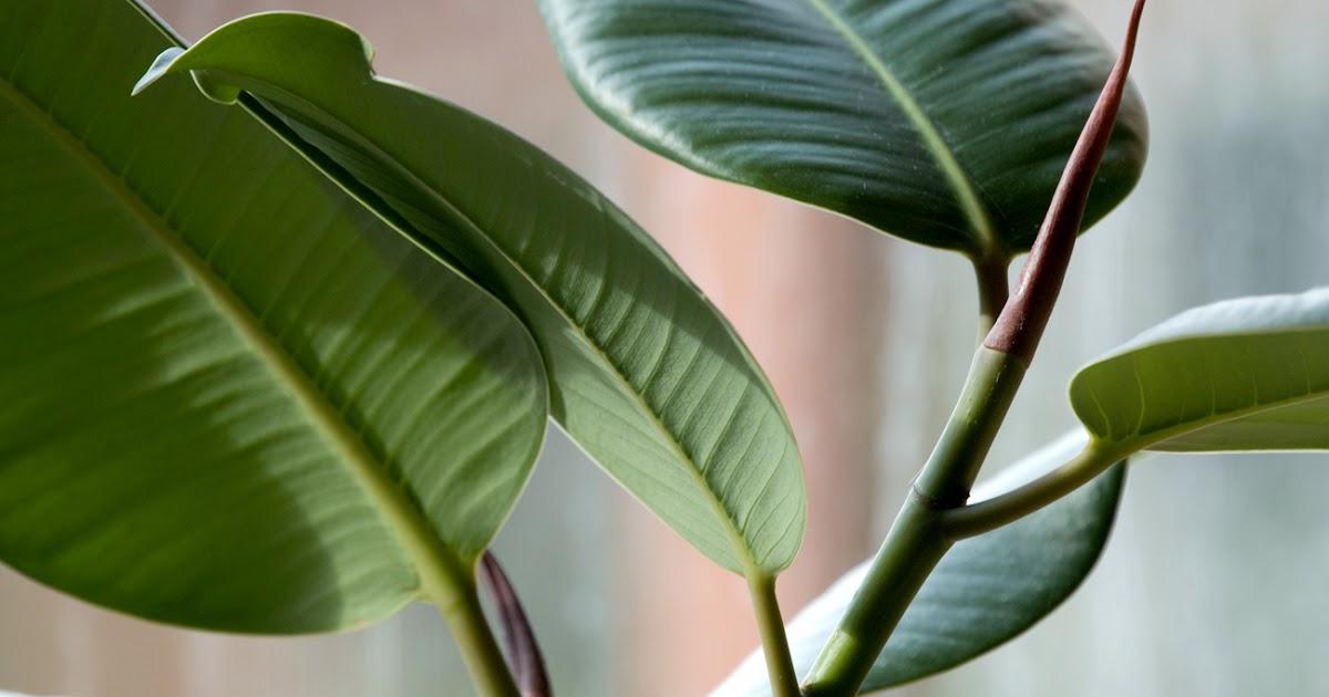 Piante Da Appartamento Che Assorbono L Umidita.Il Mondo In Un Giardino Piante Utili Contro L Inquinamento Domestico
