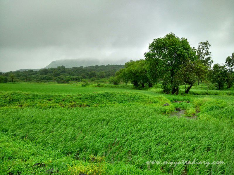 Nature's garden on the Trimbakeshwar -Ghoti road near Nashik, Maharashtra
