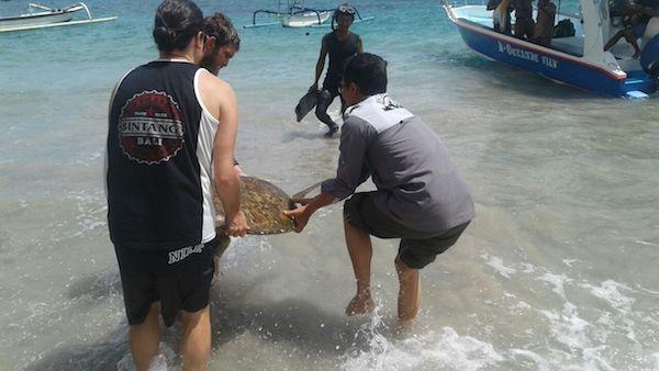 Pelepasan Penyu Hijau - BKSDA Bali Bersama Pelaku Pariwisata dan Pihak Terkait