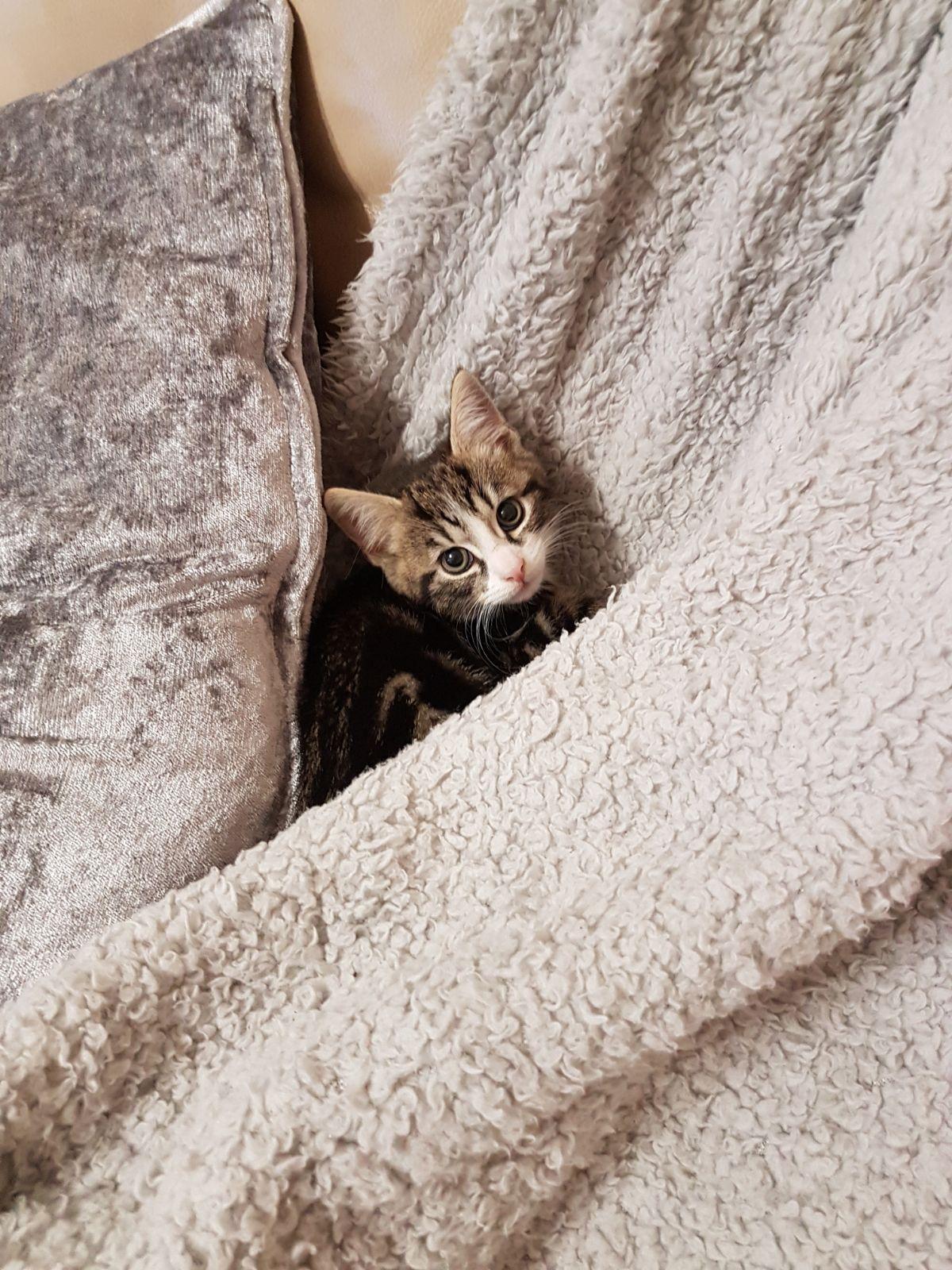 Cats Protection Bridgend Facrbook