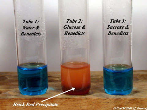 benedicts test for reducing sugars lab