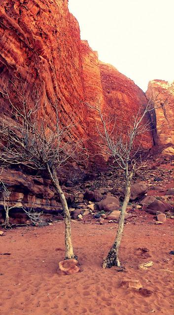 Vegetación Wadi Rum