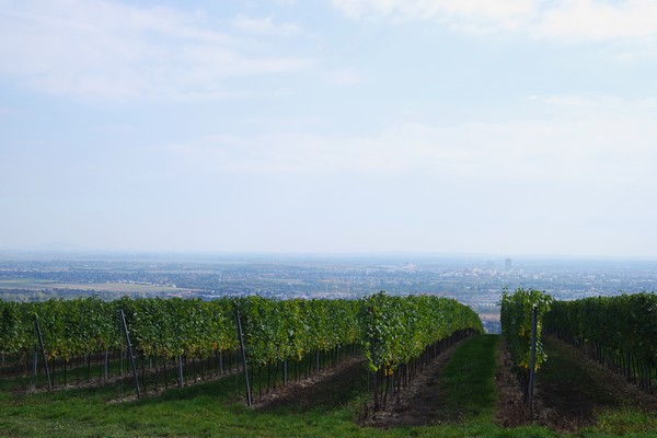 vienne floridsdorf bisamberg vignes