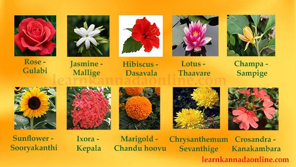 Learn Kannada Online Flower Names In Kannada Learn Flower Names