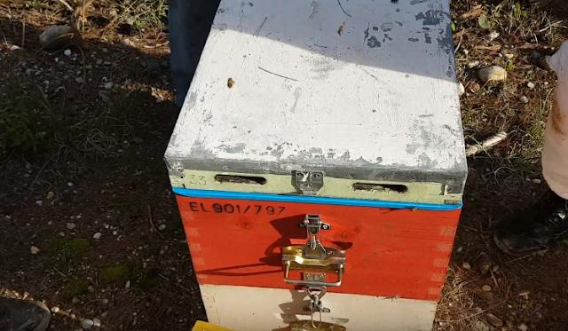 Επαγγελματίας μελισσοκόμος, δείχνει ΕΠΙΚΑΙΡΟΥΣ χειρισμούς στο πεύκο εν όψει χειμώνα!