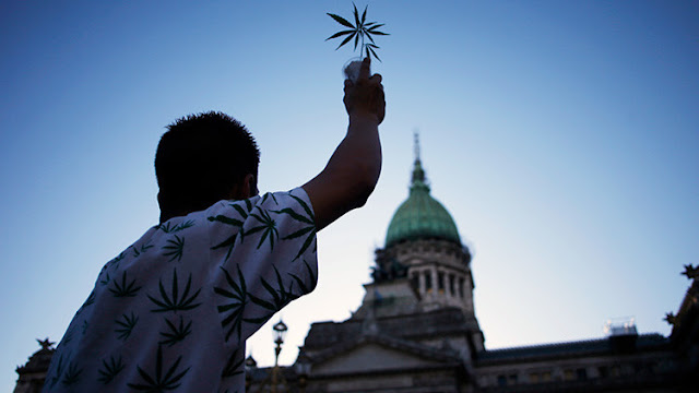 Defensores de la marihuana medicinal luchan por legalizar su cultivo en Argentina