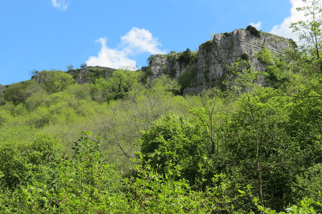 A line of cliffs against blue skies with woods below them.