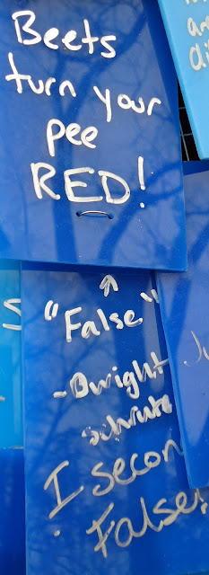 "Sculpture graffiti--silver on dark blue--""Beets turn your pee red!""  Underneath, on separate tile--""False--Dwight Schrute"" and ""I second, False!""  Caption ""The truth lies somewhere in between?"""