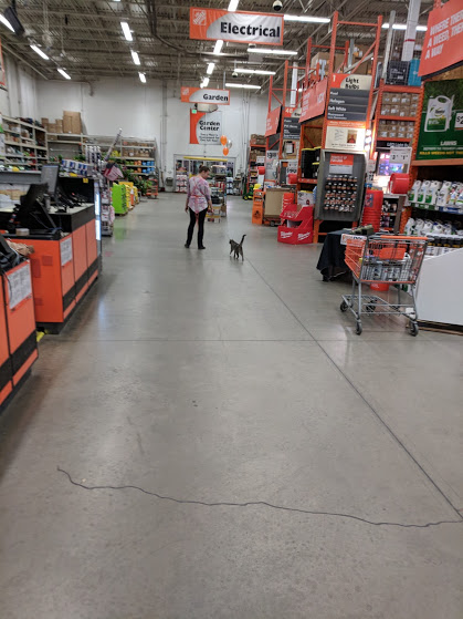 78ae7ef1dc5 Shirley Bahlmann Biz: Home Depot Cat