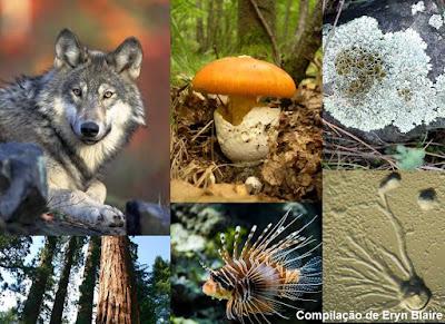 ecologia, biologia, Preservar espécies, preservar, espécies, serviços ambientais, environmental services, environmental, services, meio ambiente, conservação, biodiversidade, ambiental, sobrevivência humana, nature, blog natureza e conservação, animais, wildlife