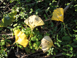 黄色くなったイチョウの葉