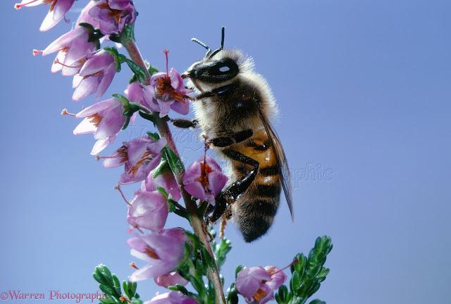 Πωλείται μέλι ανθέων στην Κορινθία