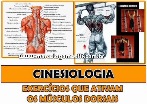 Cinesiologia - Músculos Dorsais