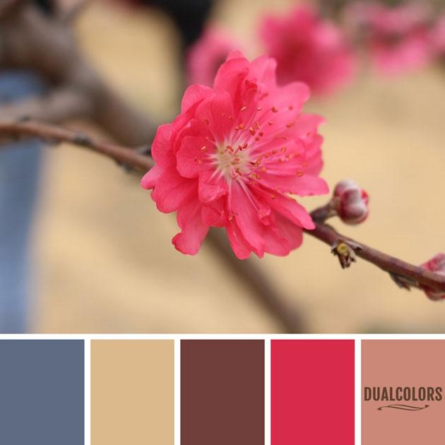 color_paleta_77