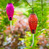 How to Fix Leaking Hummingbird Feeders: 4 Simple Suggestions