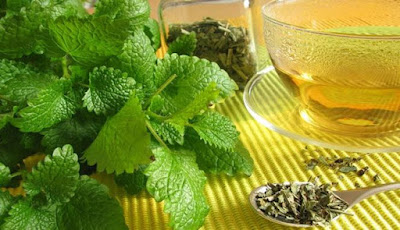 Khasiat Tanaman Herbal Melissa atau Lemon Balm