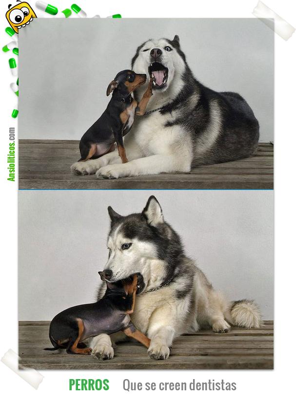 Chiste de Perros que se creen Dentistas