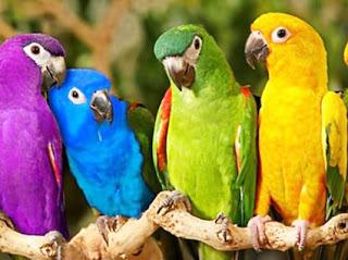 Makna-Arti-Lirik-Lagu-Burung-Kakatua-berasal-dari-Daerah-Maluku