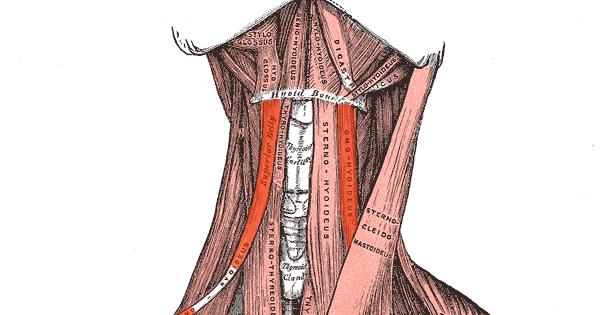 inflamacion musculo digastrico