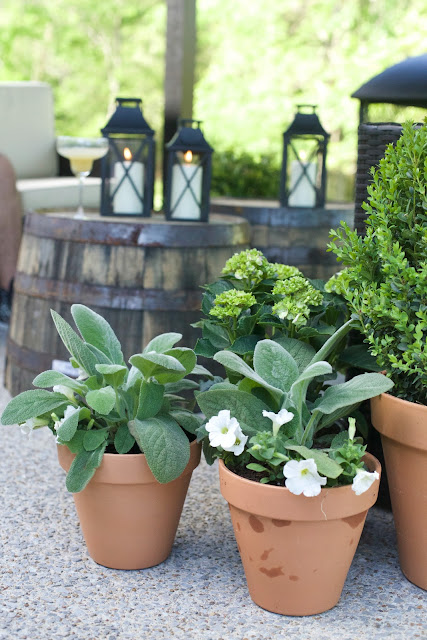 Close up of plants on patio