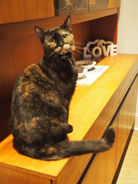 Tortoiseshell cat love