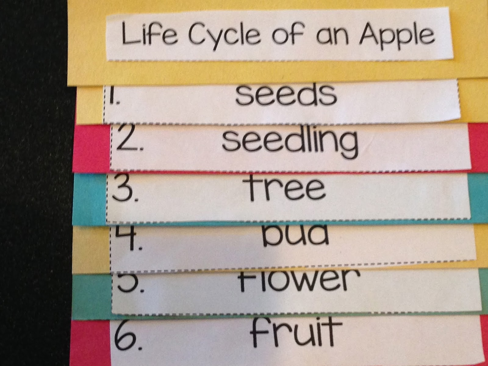 apples week, kindergarten apple unit, apple life cycle
