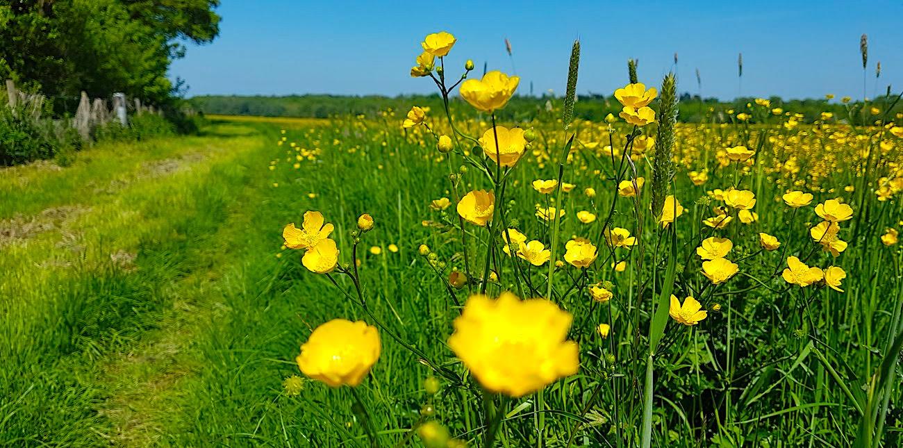 Hemingford Meadow
