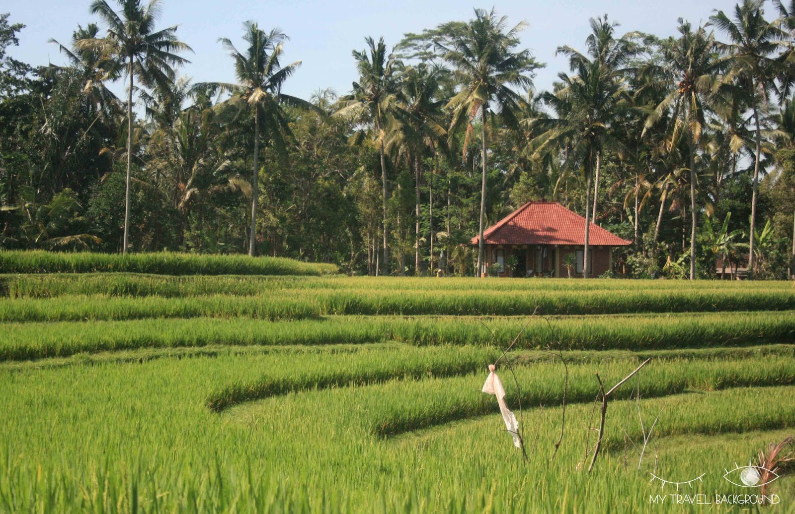 My Travel Background : 10 choses à faire à Bali - Découvrir les rizières